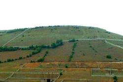 هدفگذاری برای توسعه باغات در ۵۰۰۰ هکتار از اراضی شیب دار استان