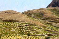 افتتاح طرح توسعه باغات در اراضی شیبدار دورود