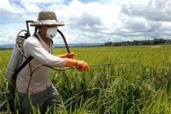 ساماندهی ۳۴ فروشگاه سم و بذر در استان/توسعه باغات ازاولویتها است