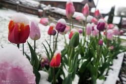 برف بهاری در آلمان