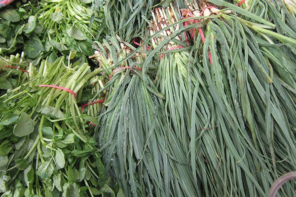 گیاهان کوهی سفره های مردم را معطر کرد/خطرانقراض بیخ گوش گیاهان