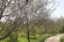 سیل و سرما به ۴۱۹۶ هکتار از اراضی کشاورزی خراسان جنوبی خسارت زد