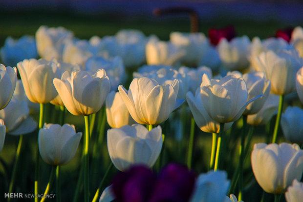 الربيع في الحديقة الوطنية للعلوم النباتية في طهران