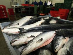 Fishery-expors