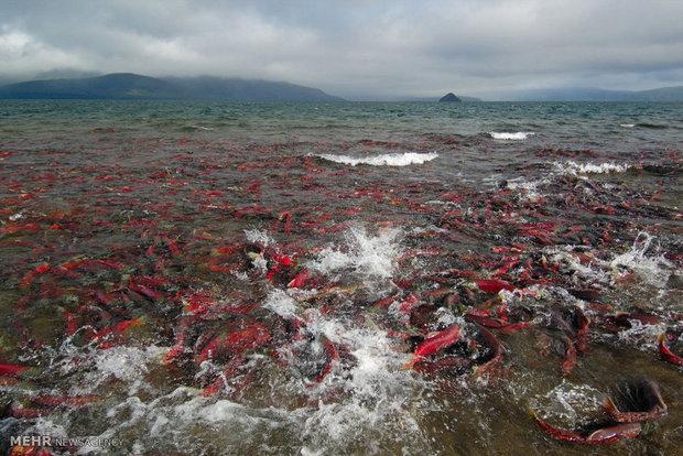 تصاویر/ مناظر طبیعی در شبه جزیره کامچاتکا