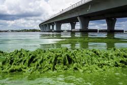آلودگی رودخانه سنت لوئیس در آمریکا