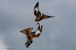 جنگلی حیوانات اور پرندوں کی منتخب تصویریں