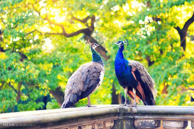 رنگین کمان پرندگان