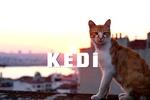 İstanbul kedileri dünyada ün kazandı