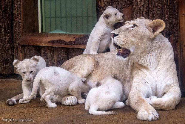 بچه های حیوانات