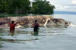 کشف لاشه ۱۵ متری آبزی اسرار آمیز در سواحل اندونزی