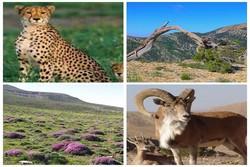 افزایش۱۷ درصدی جمعیت وحوش در مناطق حفاظت شده استان همدان