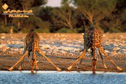 پارک ملی کنیا