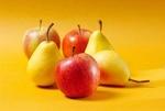۱۴ هزار تن  گلابی در  باغات شهرستان قزوین  تولید می شود