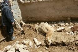 تلف شدن ۱۳۰ راس گوسفند و  بز به علت مسمومیت در استان فارس