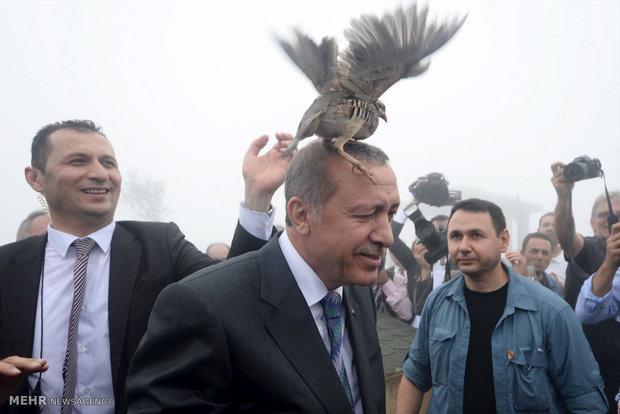 Recep Tayyip Erdoğan'ın siyasi yaşamı