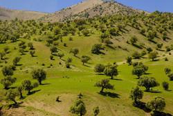 اختصاص ۳۵ میلیارد ریال برای تکمیل منطقه گردشگری بلوط شهر ایلام