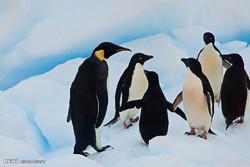 قطب جنوب میں وائلڈ لائف