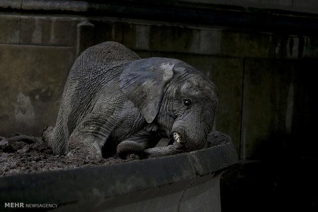 حیوانات غمگین باف وحش بوینس آیرس