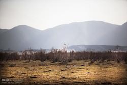 دریاچههای فارس خشک تر از همیشه/ برنجکاری همچنان رواج دارد