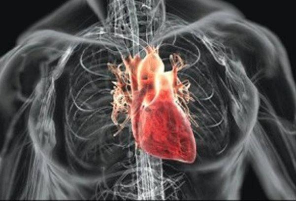 داربست درمان سکته قلبی ساخته شد