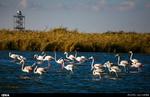Wetlands restoration law declared