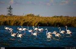 Miqan Wetland in Arak