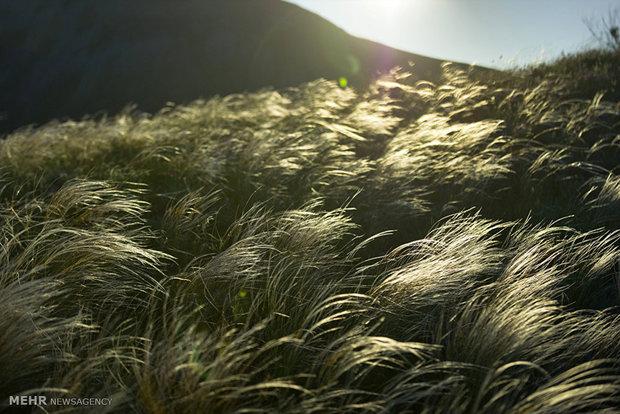 طبیعت زیبای قره داغ