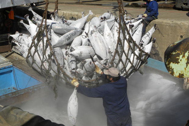 FAO holds first round of international talks to end illicit fishing