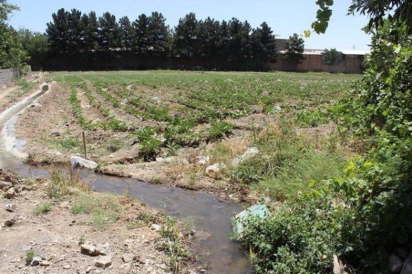 کشت سبزی آلوده در حاشیه «قره سو»/ رودخانه مملو از فاضلاب است