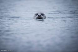 مختارات من صور الحيوانات حول العالم /صور