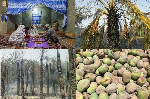 خسارات گرمازدگی در بلوچستان