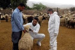مردم نقش مؤثری در پیشگیری از بیماری تب کریمه کنگو دارند