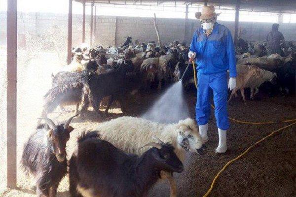 دامداران خوزستانی مراقب شیوع تب کریمه کنگو باشند