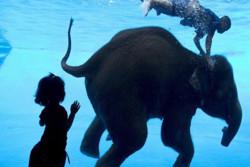 فیلم: شنا کردن فیل