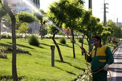 عملیات سمپاشی درختان شهر همدان آغاز شد