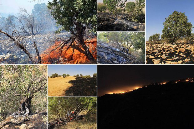 آتش در «زاگرس» به پا شد؛ بلوطهایی که میسوزند و میسازند