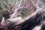 پرتگال میں درخت گرنے سے 13 افراد ہلاک