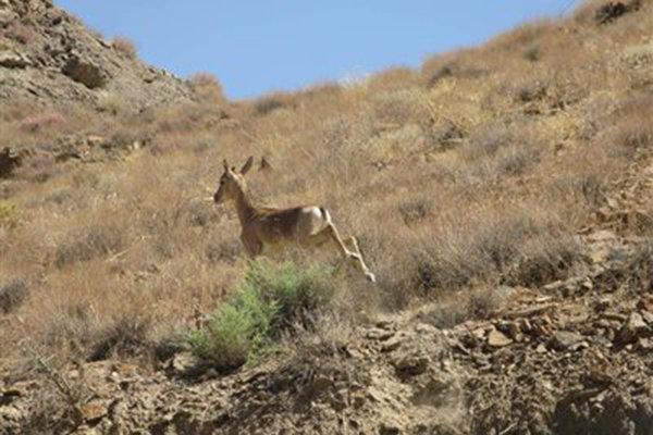 اعتراض به کاهش مناطق حفاظت شده مصوبه شورای عالی محیط زیست