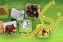 ۷۴۸ هزار تن گندم امسال در آذربایجان غربی تولید می شود