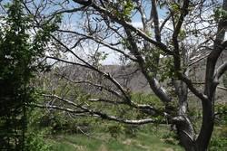 ۶۰۰۰ اصله درخت در خراسان جنوبی پلاک گذاری شد
