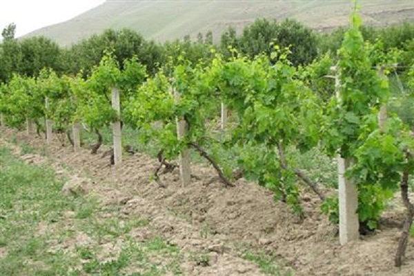 واگذاری زمین برای توسعه باغات در کردستان/کشاورزی محور توسعه استان