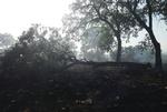 آتش سوزی جنگلها در کهگیلویه و بویراحمد