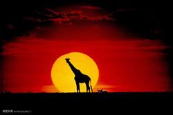 Dünyanın farklı bölgelerinde güneşin batışı