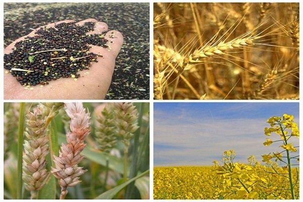 موفقیت در خرید توافقی محصولات کشاورزی نیازمند سرمایه در گردش است