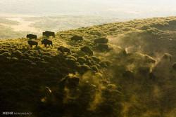 محیط زیست مورد تهدید زمین
