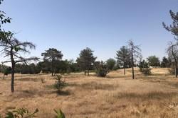 تبدیل ۲۵ هکتار از اراضی «کاخ مراورید» به باغ گلها
