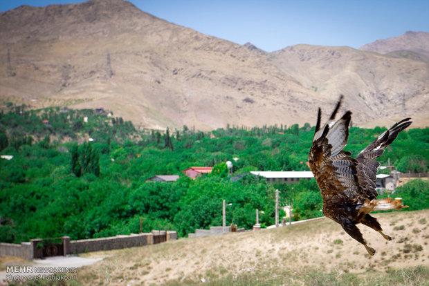 برگزاری تورهای یکروزه طبیعتگردی در پناهگاه حیاتوحش موته اصفهان