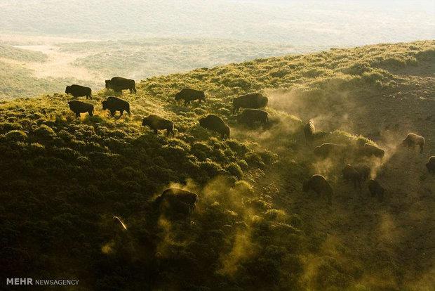البئية الطبيعية والمخاطر التي تهددها