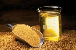 fao oilseed